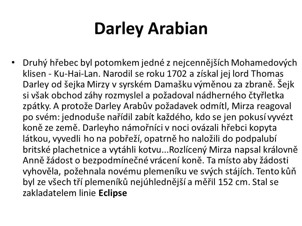 Darley Arabian