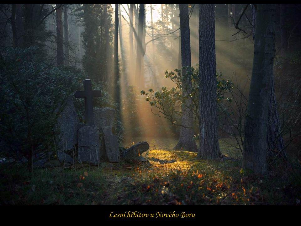 Lesní hřbitov u Nového Boru