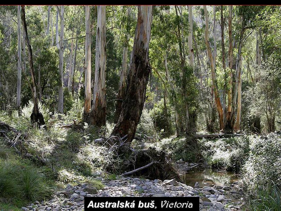 Australská buš, Victoria