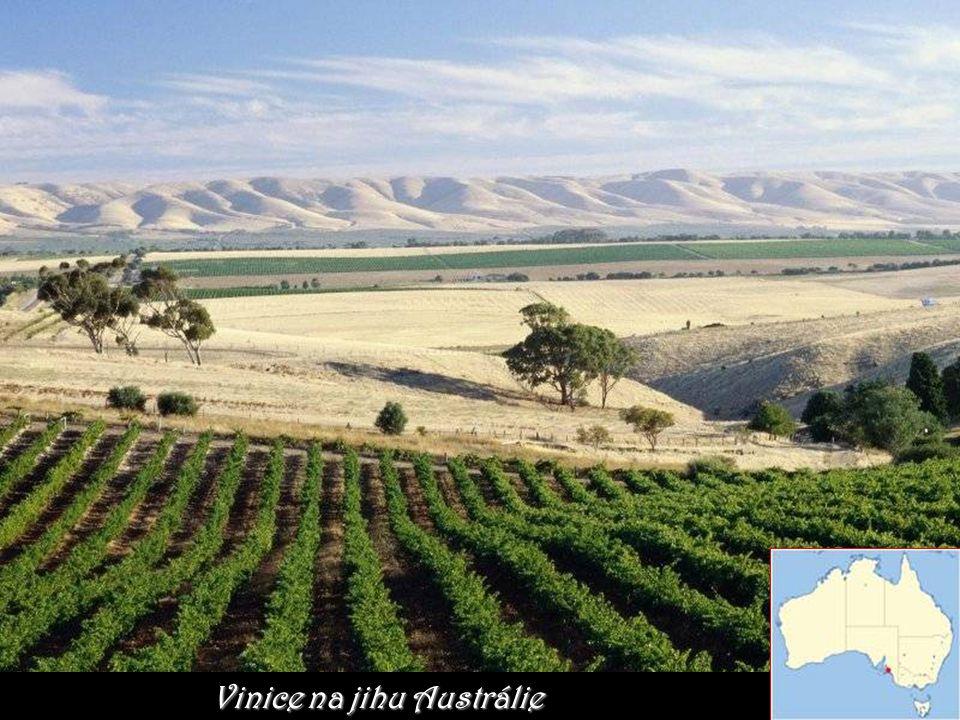 Vinice na jihu Austrálie