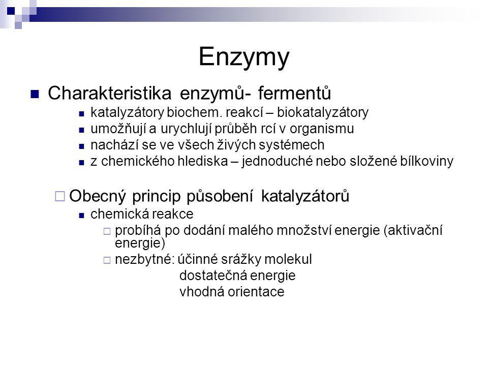 Enzymy Charakteristika enzymů- fermentů
