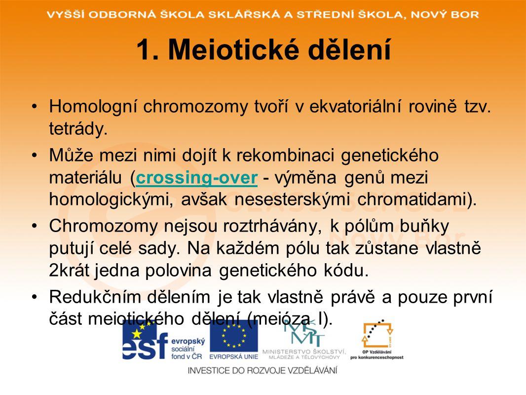 1. Meiotické dělení Homologní chromozomy tvoří v ekvatoriální rovině tzv. tetrády.