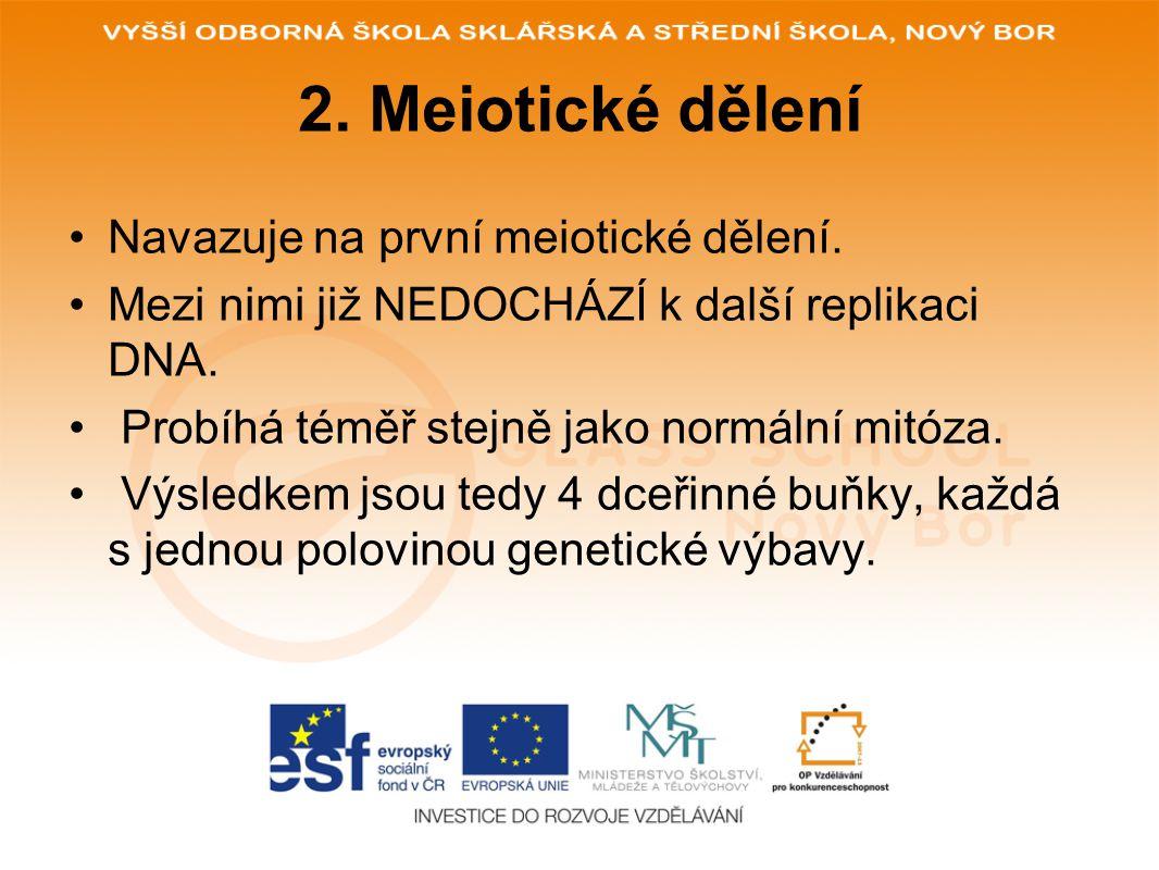 2. Meiotické dělení Navazuje na první meiotické dělení.
