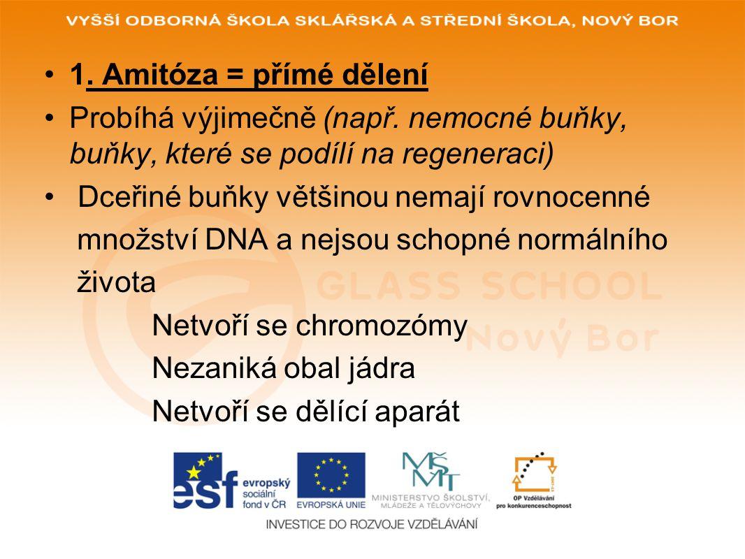 1. Amitóza = přímé dělení Probíhá výjimečně (např. nemocné buňky, buňky, které se podílí na regeneraci)