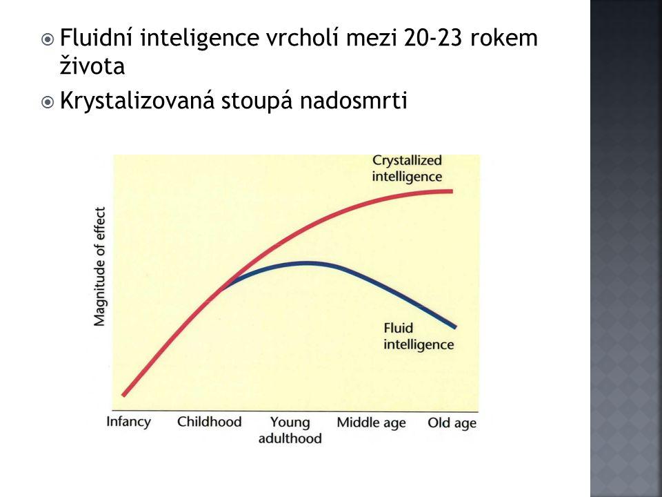 Fluidní inteligence vrcholí mezi 20-23 rokem života