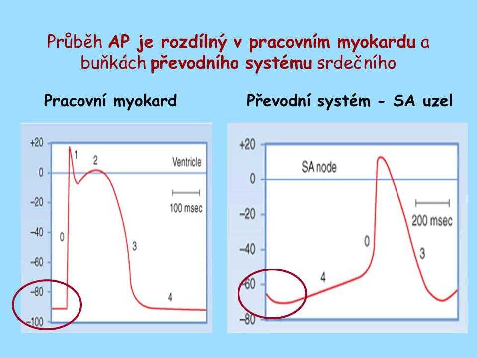 Průběh AP je rozdílný v pracovním myokardu a buňkách převodního systému srdečního