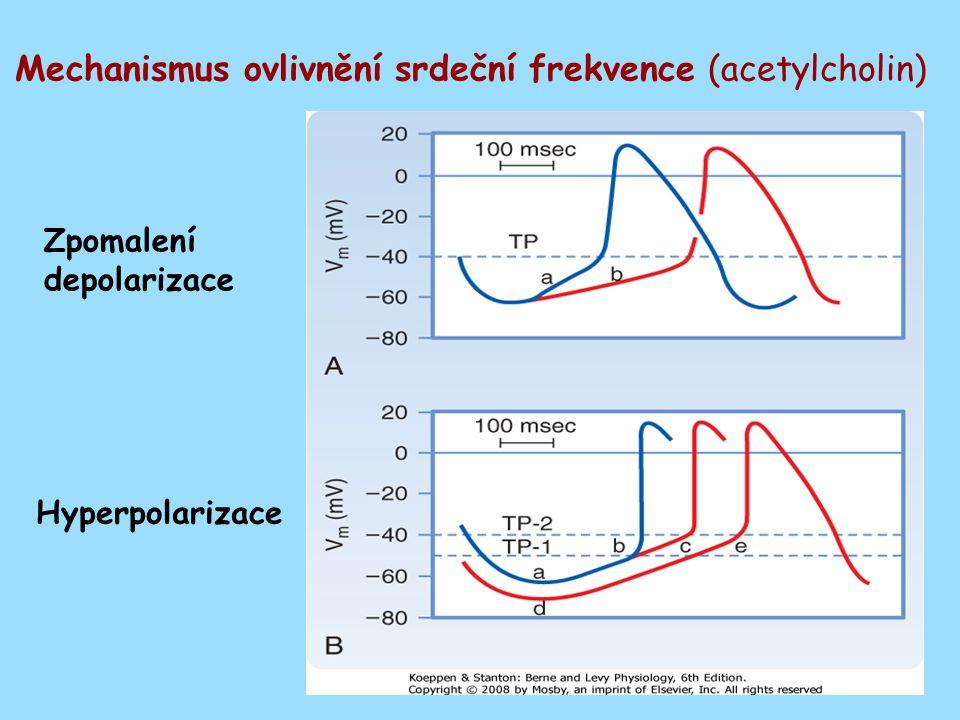 Mechanismus ovlivnění srdeční frekvence (acetylcholin)
