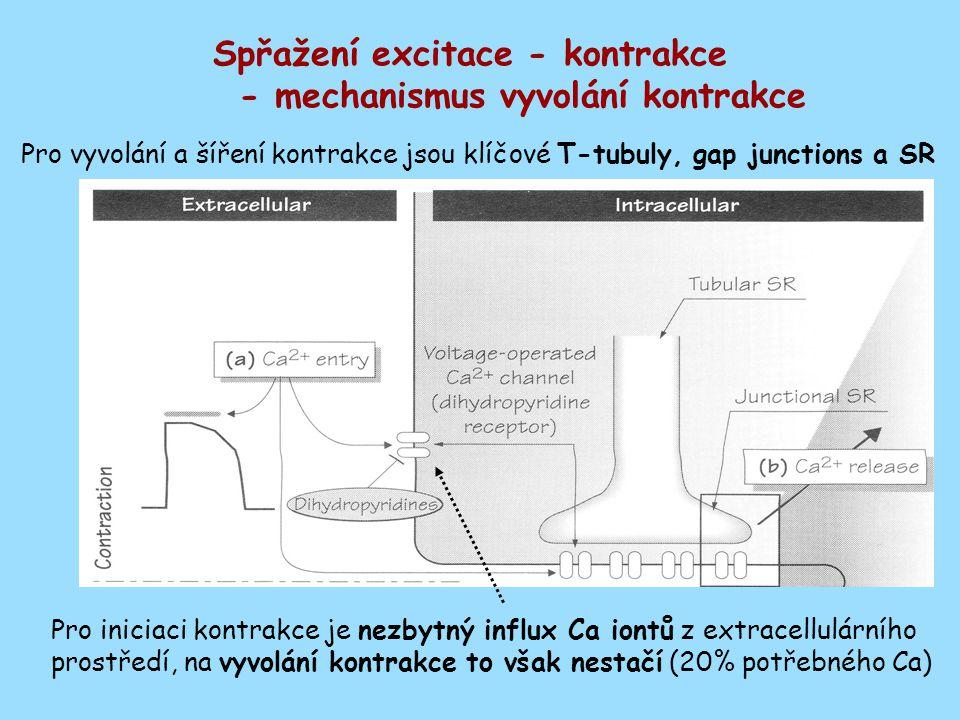 Spřažení excitace - kontrakce - mechanismus vyvolání kontrakce