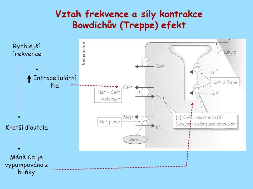 Vztah frekvence a síly kontrakce Bowdichův (Treppe) efekt