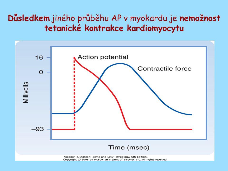Důsledkem jiného průběhu AP v myokardu je nemožnost tetanické kontrakce kardiomyocytu