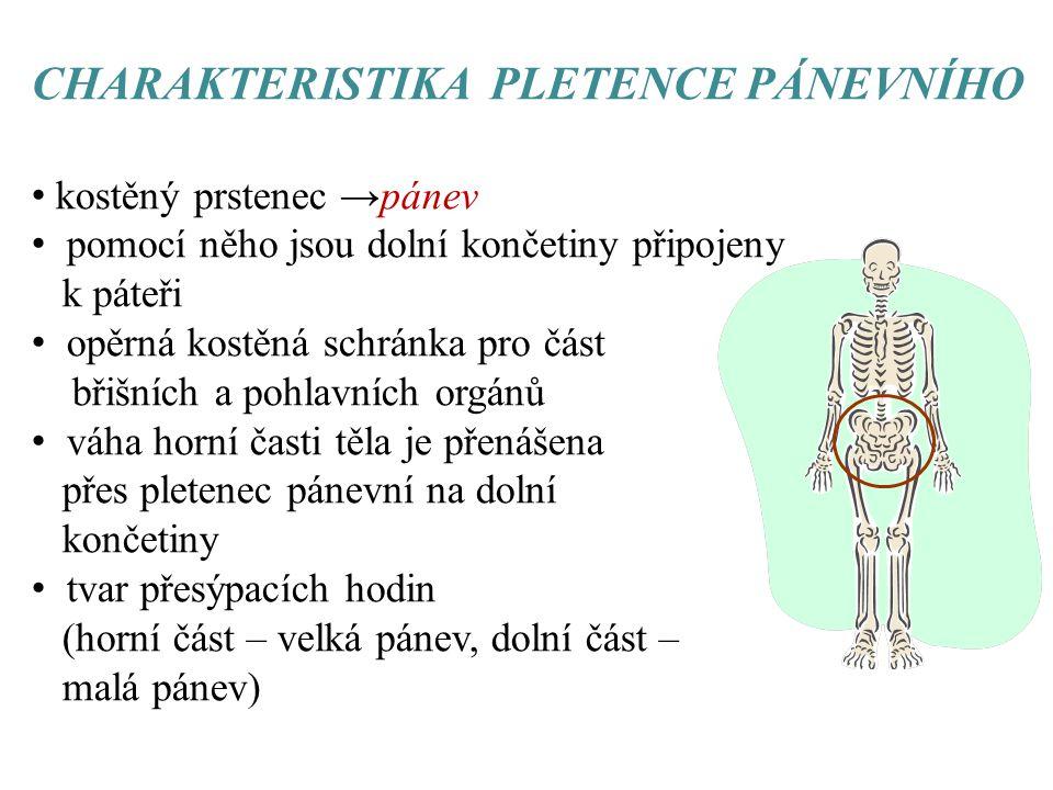 CHARAKTERISTIKA PLETENCE PÁNEVNÍHO