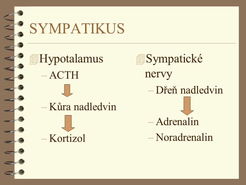 SYMPATIKUS Hypotalamus Sympatické nervy ACTH Dřeň nadledvin