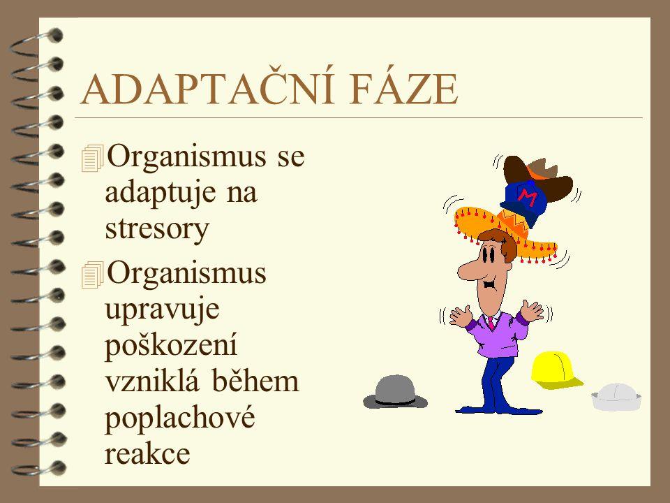 ADAPTAČNÍ FÁZE Organismus se adaptuje na stresory