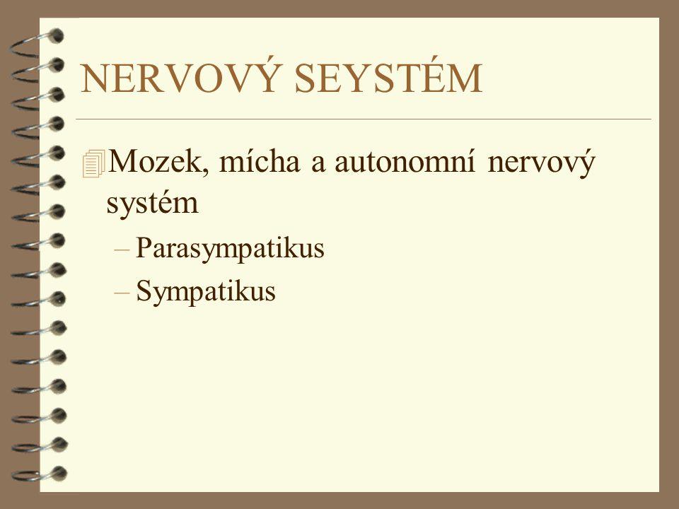 NERVOVÝ SEYSTÉM Mozek, mícha a autonomní nervový systém Parasympatikus