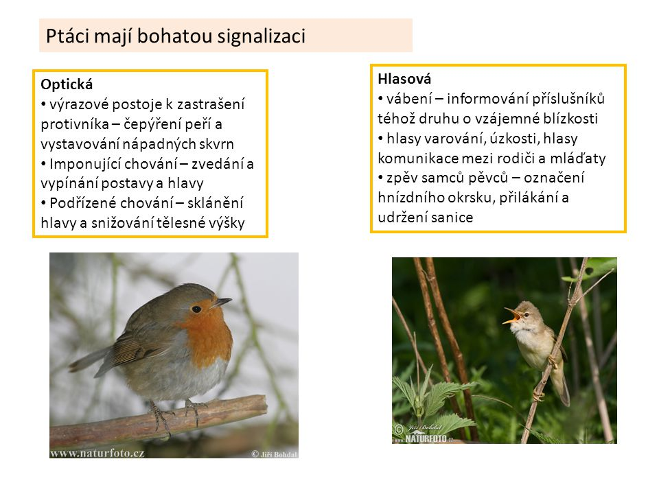 Ptáci mají bohatou signalizaci