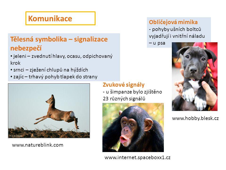 Komunikace Tělesná symbolika – signalizace nebezpečí Obličejová mimika