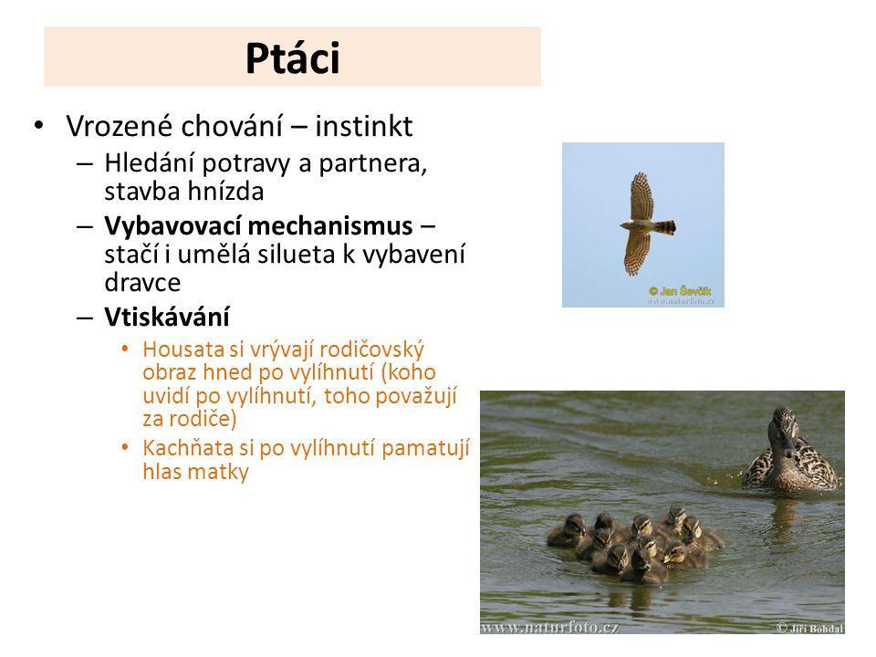 Ptáci Vrozené chování – instinkt