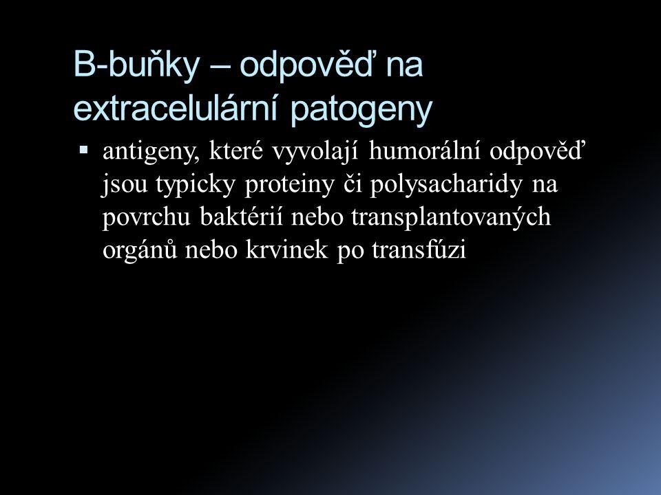 B-buňky – odpověď na extracelulární patogeny