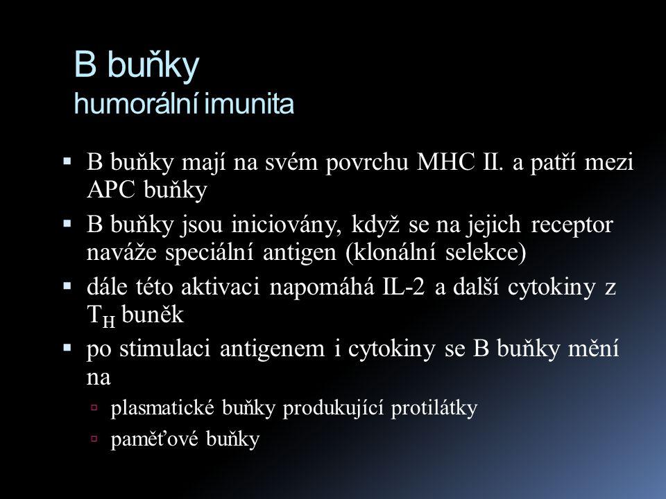 B buňky humorální imunita