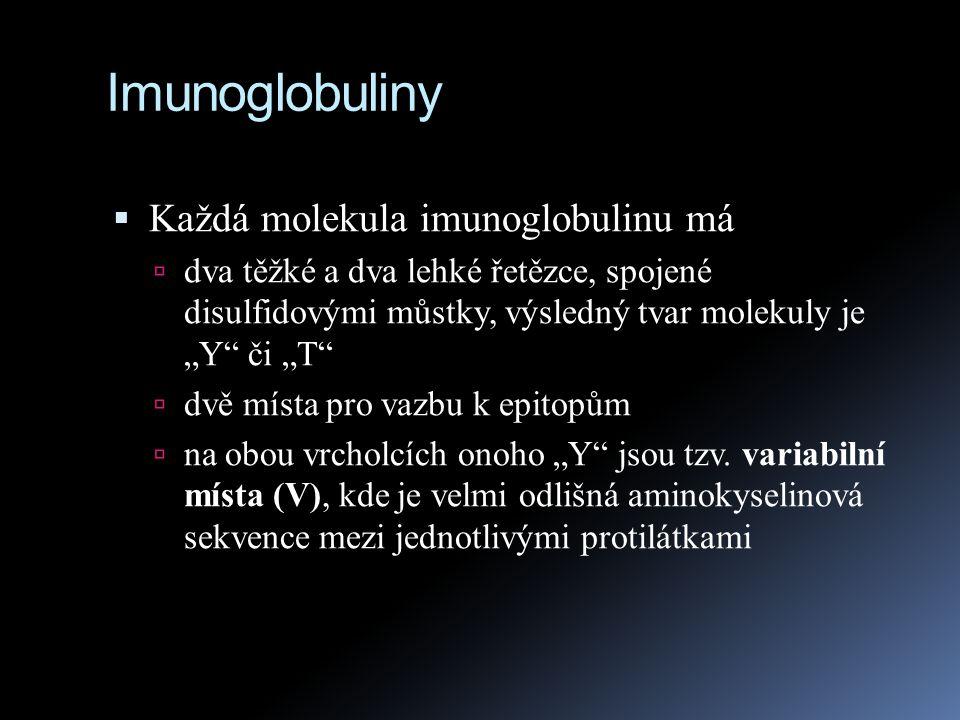 Imunoglobuliny Každá molekula imunoglobulinu má