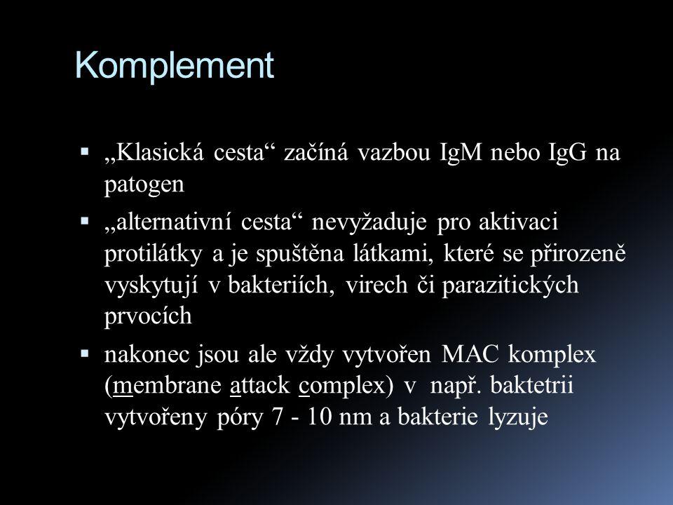 """Komplement """"Klasická cesta začíná vazbou IgM nebo IgG na patogen"""