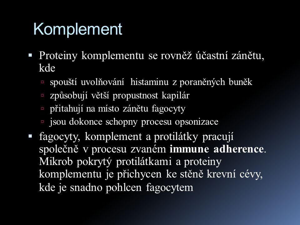 Komplement Proteiny komplementu se rovněž účastní zánětu, kde