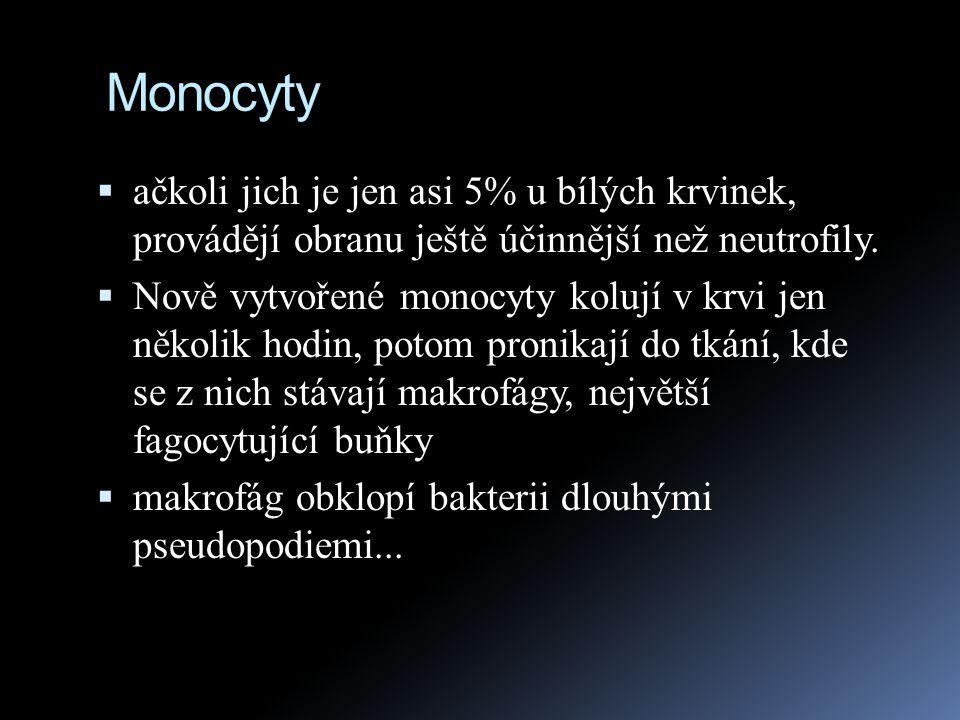 Monocyty ačkoli jich je jen asi 5% u bílých krvinek, provádějí obranu ještě účinnější než neutrofily.