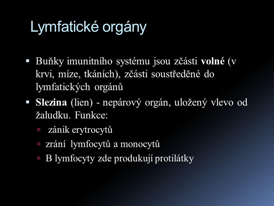 Lymfatické orgány Buňky imunitního systému jsou zčásti volné (v krvi, míze, tkáních), zčásti soustředěné do lymfatických orgánů.