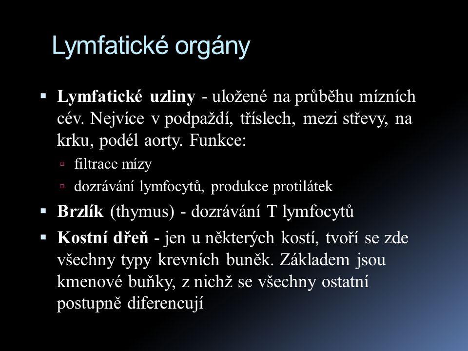 Lymfatické orgány Lymfatické uzliny - uložené na průběhu mízních cév. Nejvíce v podpaždí, tříslech, mezi střevy, na krku, podél aorty. Funkce: