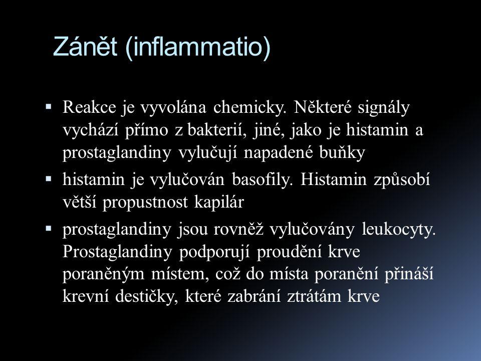 Zánět (inflammatio)