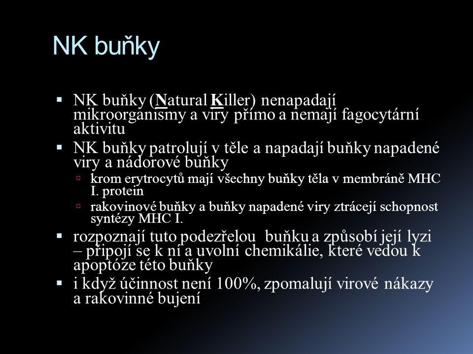 NK buňky NK buňky (Natural Killer) nenapadají mikroorganismy a viry přímo a nemají fagocytární aktivitu.