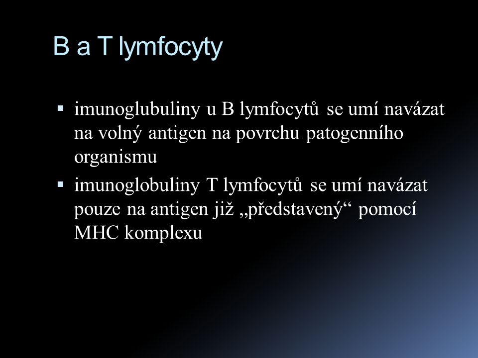 B a T lymfocyty imunoglubuliny u B lymfocytů se umí navázat na volný antigen na povrchu patogenního organismu.