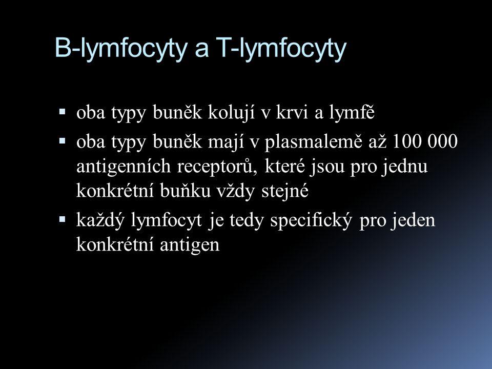 B-lymfocyty a T-lymfocyty