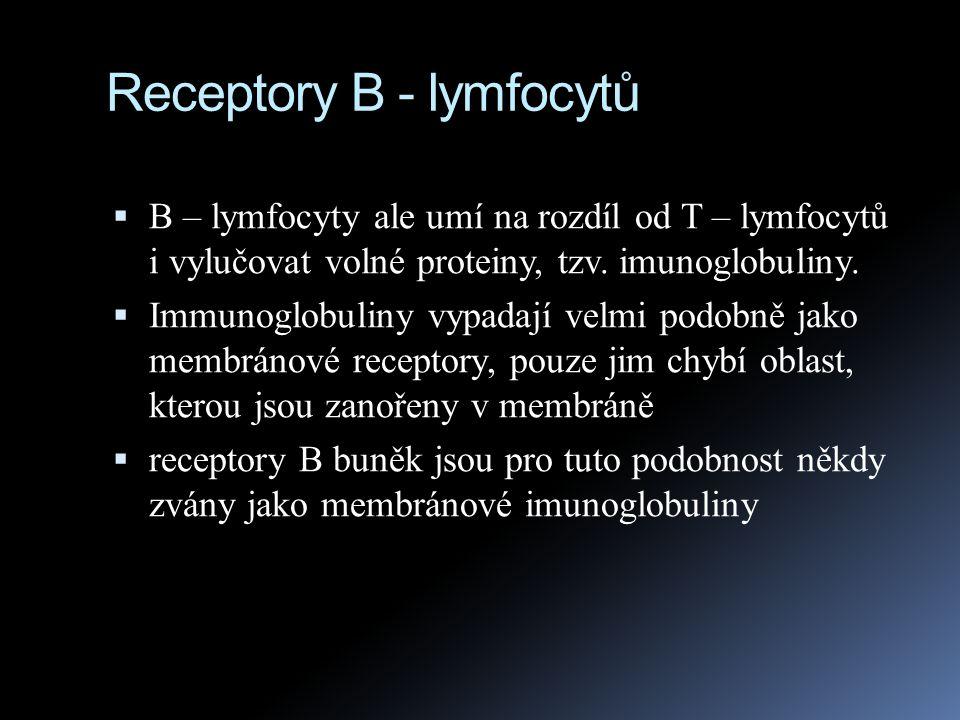 Receptory B - lymfocytů