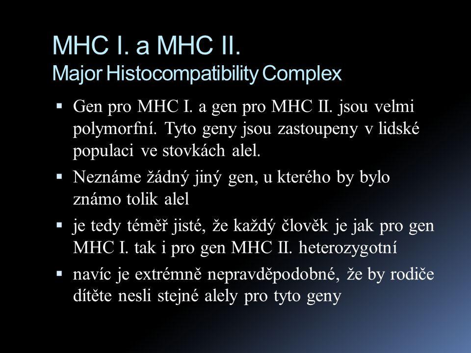 MHC I. a MHC II. Major Histocompatibility Complex