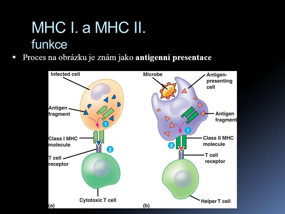 MHC I. a MHC II. funkce Proces na obrázku je znám jako antigenní presentace