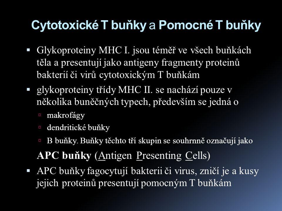 Cytotoxické T buňky a Pomocné T buňky
