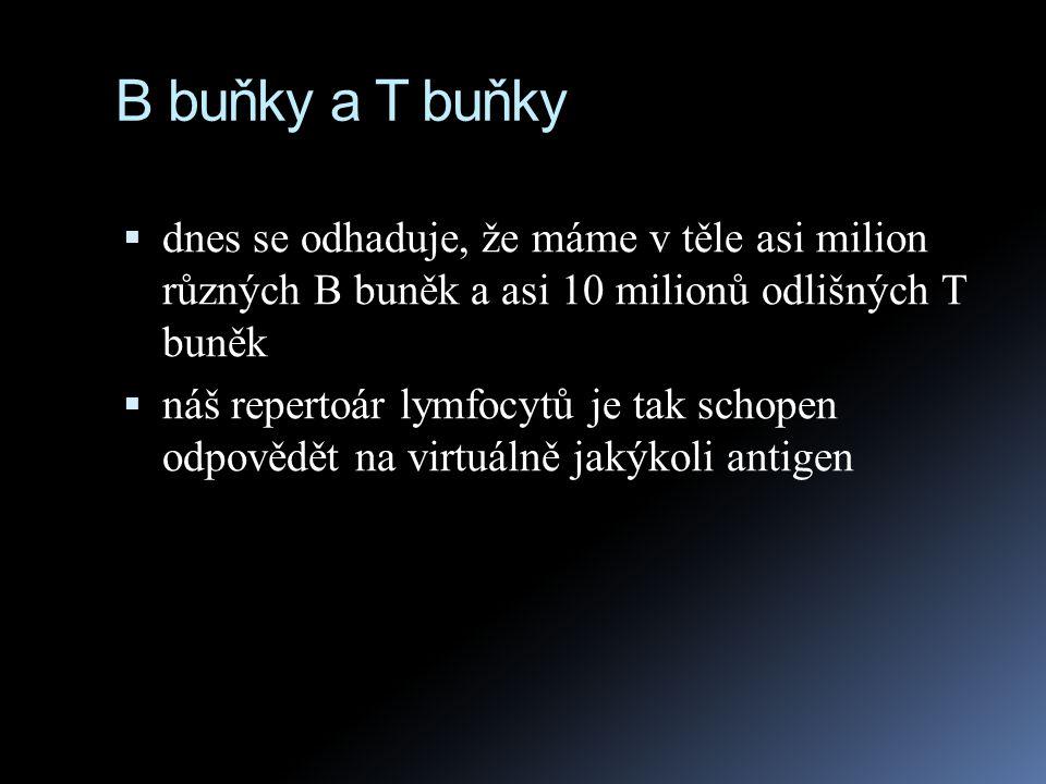 B buňky a T buňky dnes se odhaduje, že máme v těle asi milion různých B buněk a asi 10 milionů odlišných T buněk.