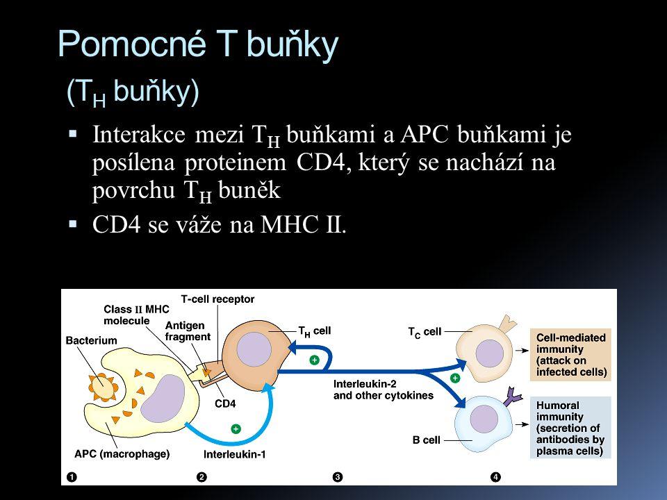 Pomocné T buňky (TH buňky)