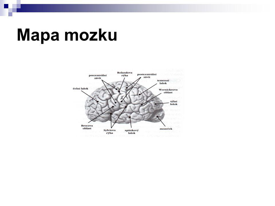 Mapa mozku