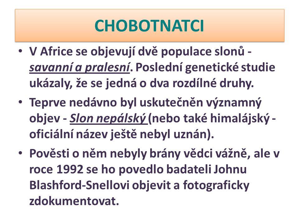 CHOBOTNATCI V Africe se objevují dvě populace slonů - savanní a pralesní. Poslední genetické studie ukázaly, že se jedná o dva rozdílné druhy.