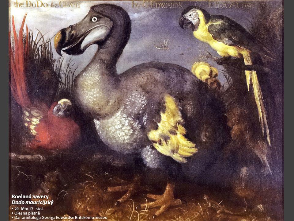 Roeland Savery Dodo mauricijský 20. léta 17. stol. Olej na plátně