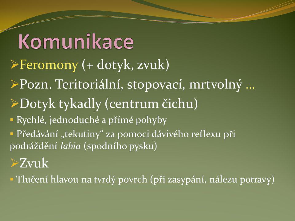 Komunikace Feromony (+ dotyk, zvuk)