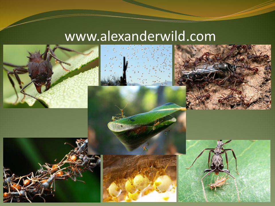 www.alexanderwild.com