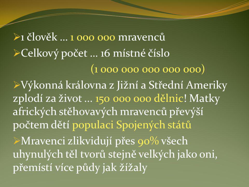 1 člověk … 1 000 000 mravenců Celkový počet … 16 místné číslo. (1 000 000 000 000 000)