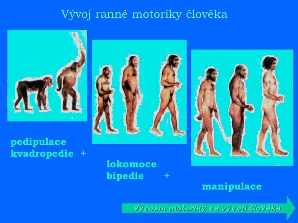 Význam motoriky ve vývoji člověka
