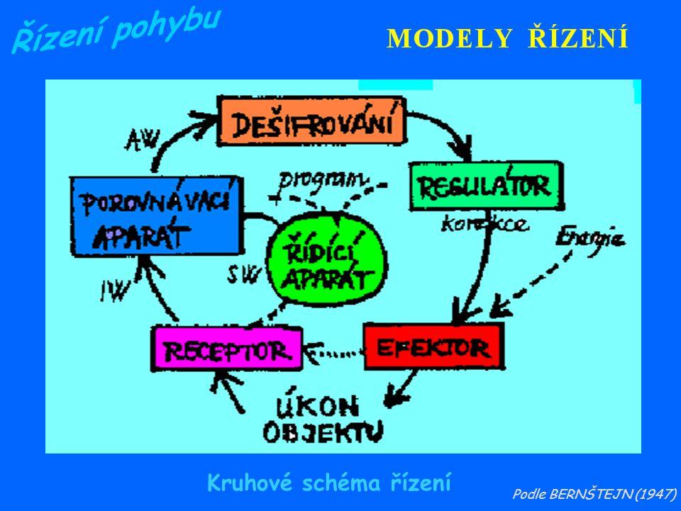 Řízení pohybu Kruhové schéma řízení Podle BERNŠTEJN (1947)