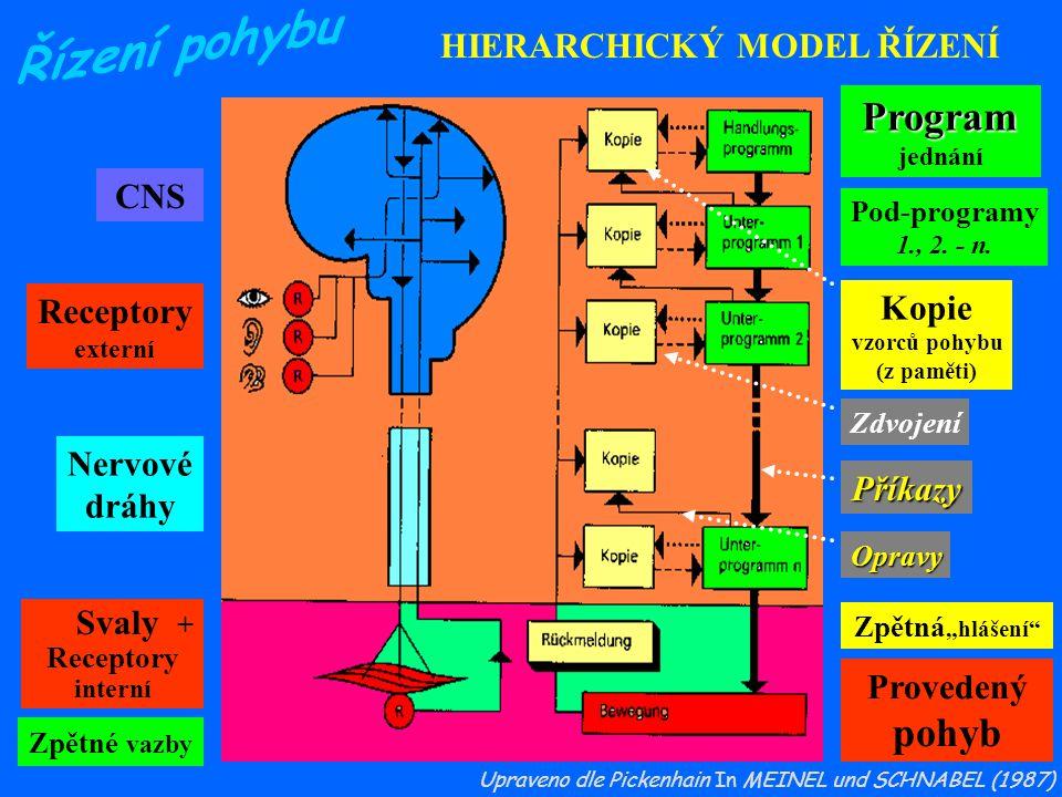 Program pohyb HIERARCHICKÝ MODEL ŘÍZENÍ CNS Kopie Receptory Nervové
