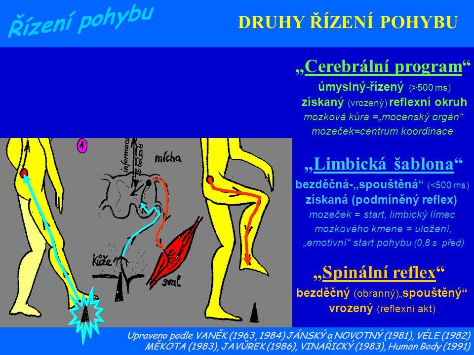 """3 2 1 DRUHY ŘÍZENÍ POHYBU """"Cerebrální program """"Limbická šablona"""