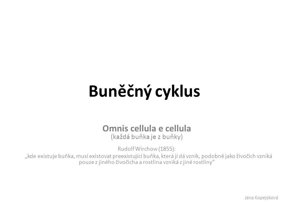 Omnis cellula e cellula (každá buňka je z buňky)